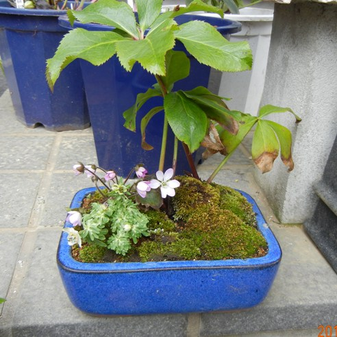 kuribonA_120304.jpg