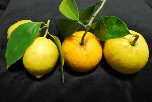 レモンドレ