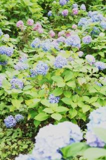 たくさん咲いていました