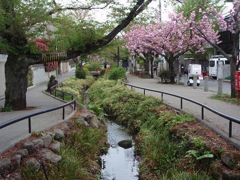 北沢川緑道5