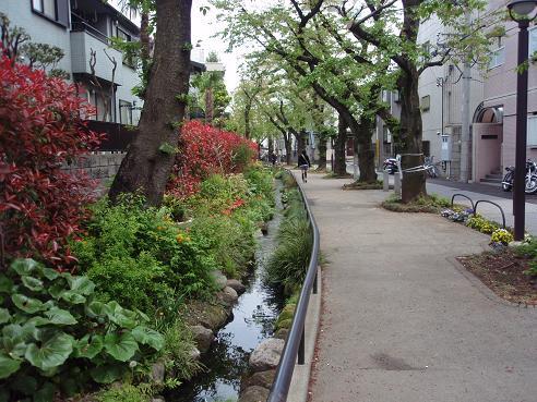 北沢川緑道3