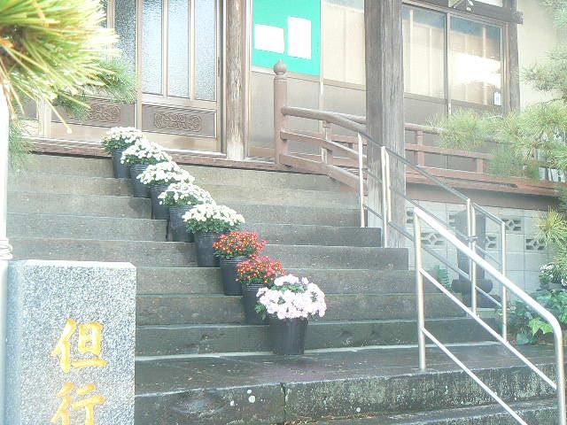 本堂階段の小菊