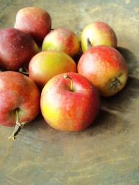 りんご達。