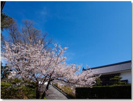 桜と東御門