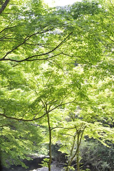 takaomomiji003.jpg