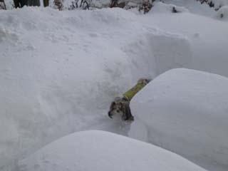 雪が少ないので隠れる所が・・・・・