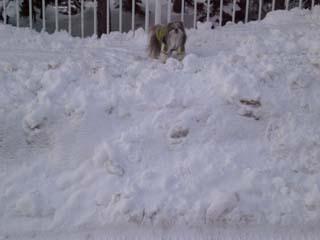 今年はまだ雪少ないね