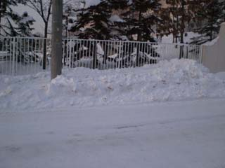 我が家の雪捨て場