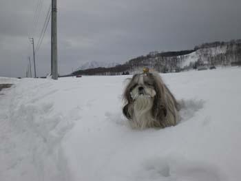 雪に埋まっちゃいました・・・