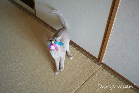 fairy110803 14