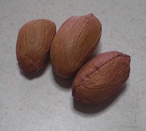 落花生 豆種