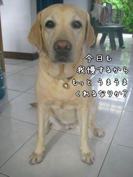 20080104-6.jpg