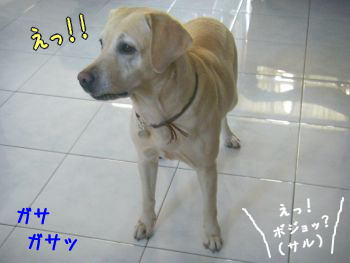 20080120-10.jpg