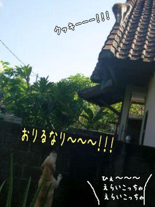 20080120_6.jpg