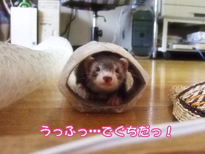 02tunnel_kuguri1.jpg
