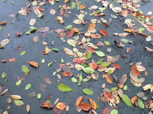 雨降り後の路面の落ち葉