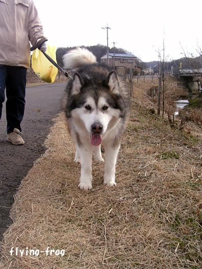 2008.1.1うぇい2