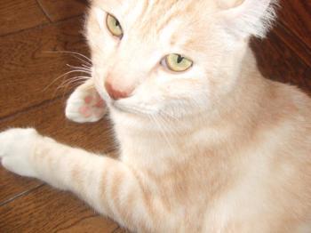 猫写真とバトン