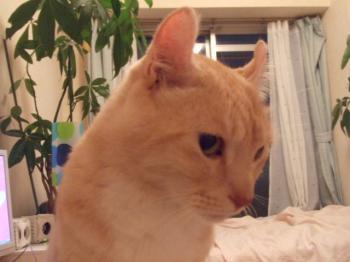 猫に駄目な食材