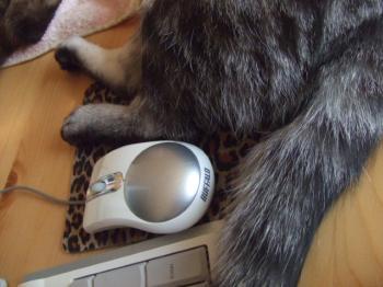 マウスを動かせない