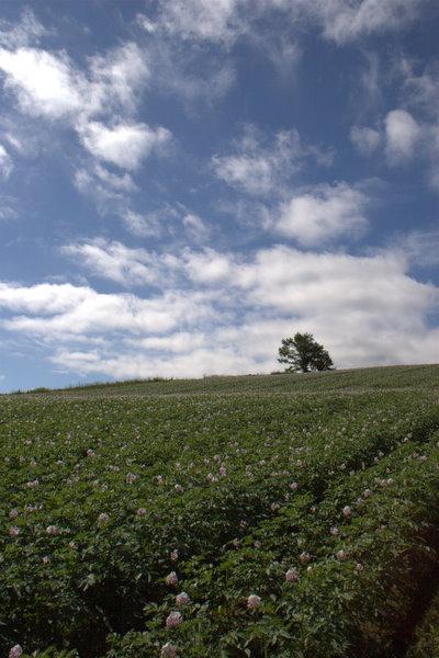 木と雲といも畑