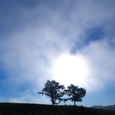 朝霧と夫婦の木