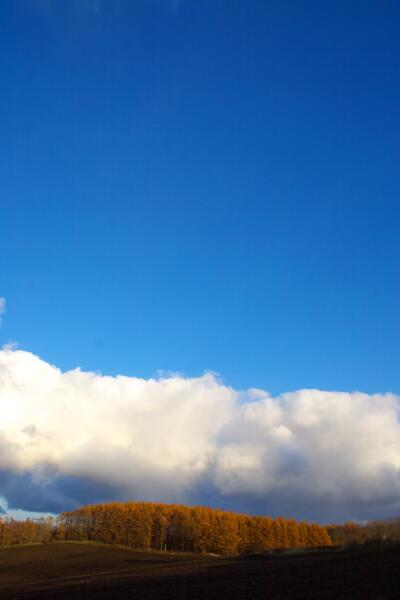雪雲と落葉松