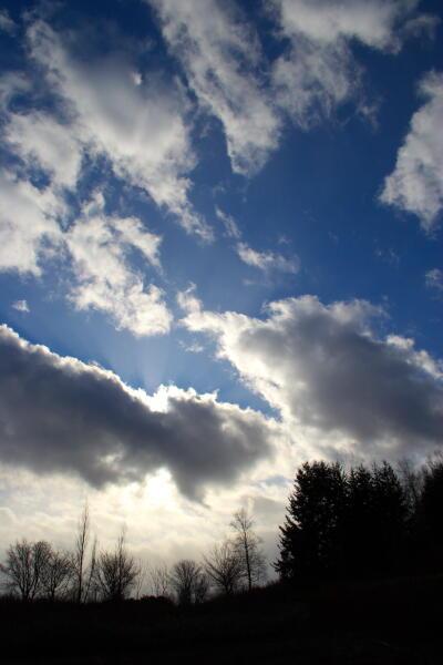 冬枯れと雲