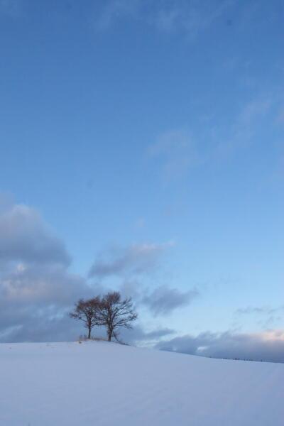 夫婦の木(冬 12月)