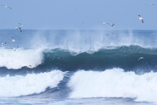 荒海とカモメ