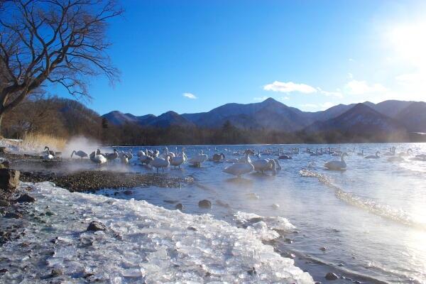 湯煙と白鳥と氷