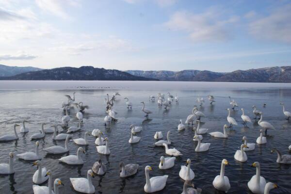 氷の白鳥の湖