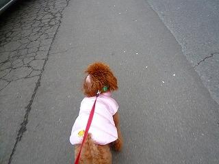 散歩命!!