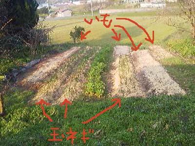 ジャガイモを植える2012