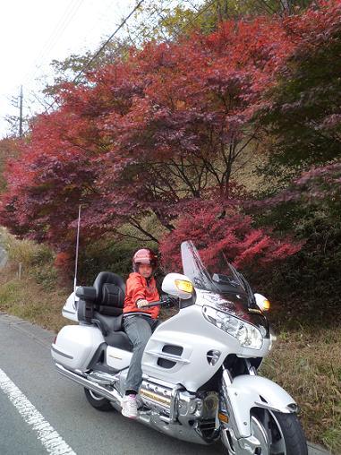 コピー ~ 2011_1105戸田別館 0037