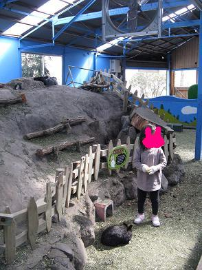 burogua 002