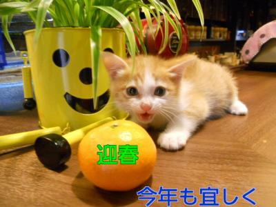 DSCN6842_10001迎春
