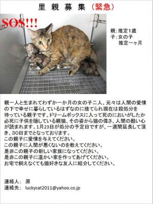 67503153_25福岡さび猫2