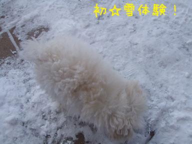 初☆雪のコピー