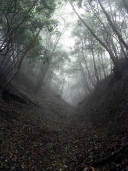 古道…しっとり いやホンマ