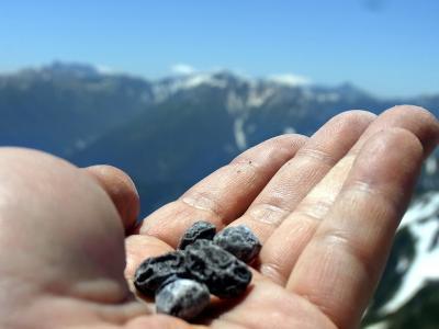 山頂でのお豆