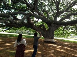 ジャイアンの木