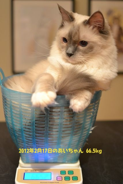 aichan17022012.jpg