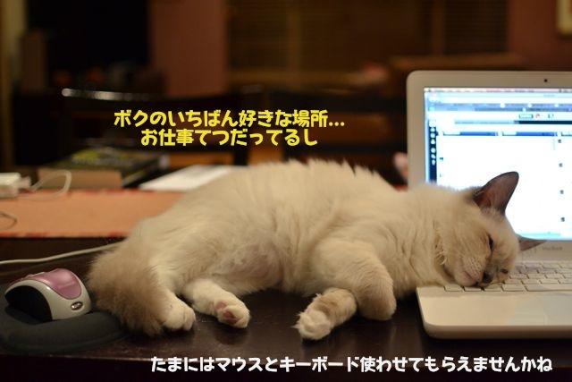 コンピューターとマウスの間