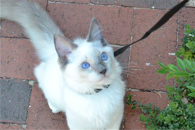 あいちゃんの青い眼