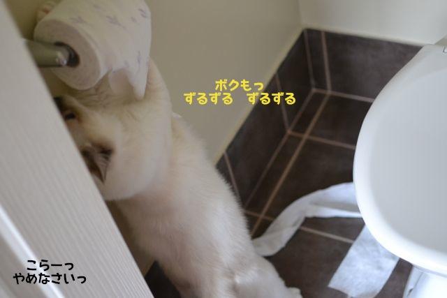toiletpaper2.jpg