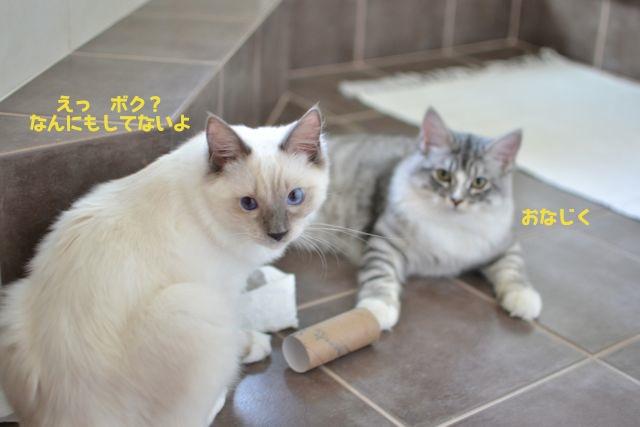 toiletpaper5.jpg