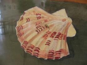 川澤稔子:海の幸・貝