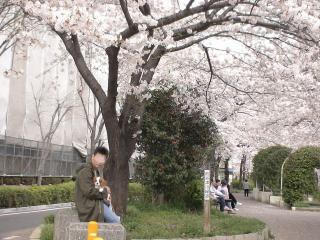 元気とのお休み処の桜