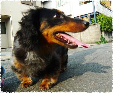 hogoken_009